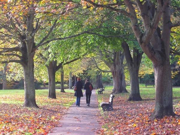 Autumn Walkers by Glostopcat