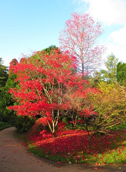 Autumn in Bath Botanical Gardens by Glostopcat