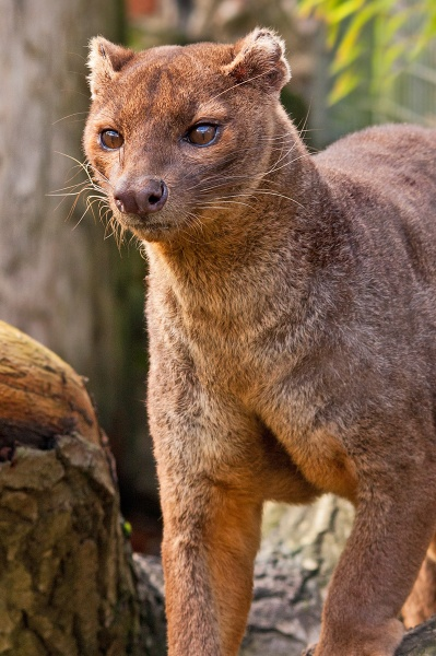 Fossa by Mike59