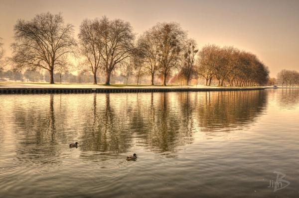 Ducks by Jimbotha