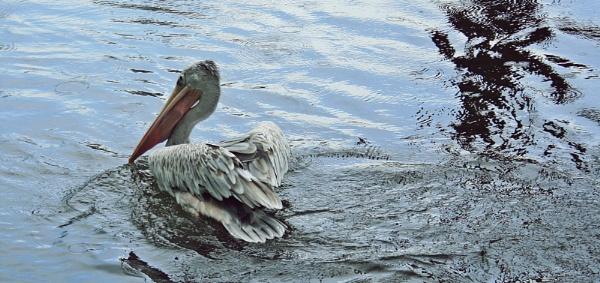 Birdland by LouisePeaches