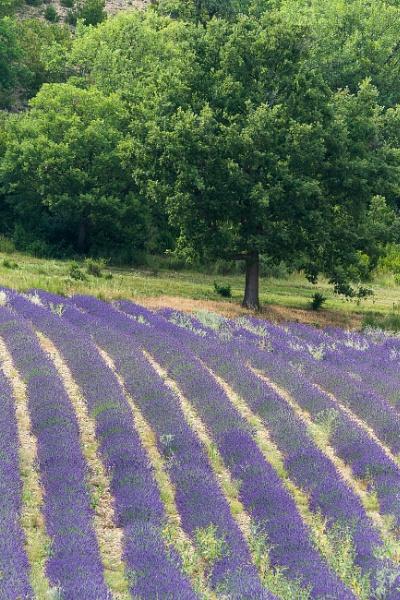 En Provence by livinglevels