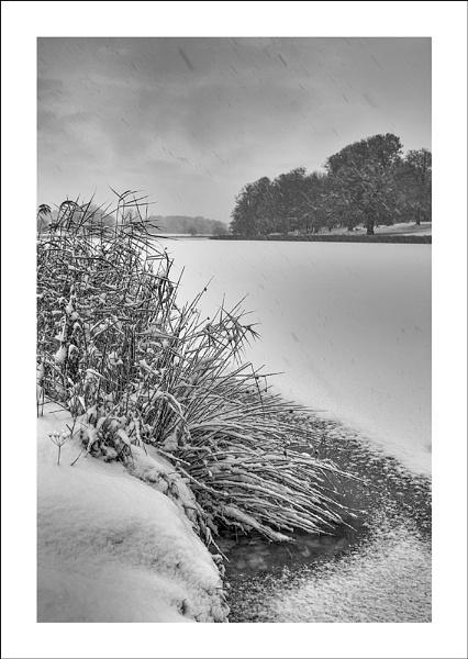 Snow Storm by katieb