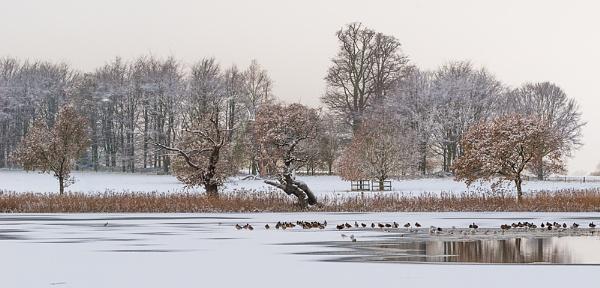 Frozen by katieb