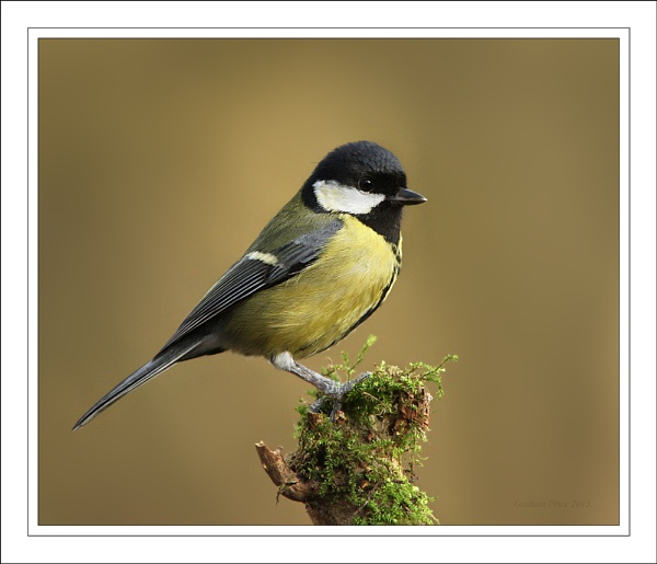 Great Tit. by Graham_P