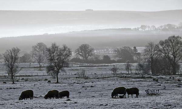 A Frosty Morning by ChrisJP