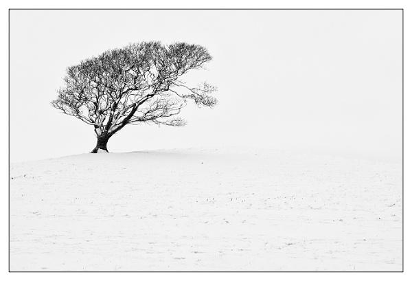 Snowy Tree. by david357
