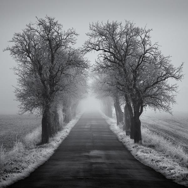 winter avenue by megpie60