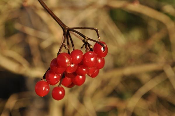 Berries by LibKerr4