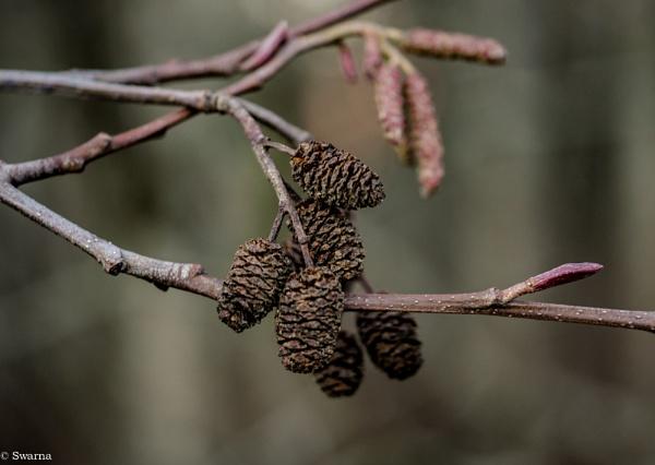 Macro Shot - Dry Seeds by Swarnadip