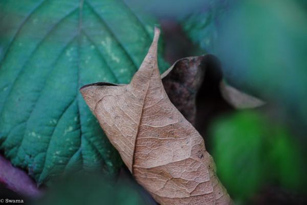 Macro Shot - Dry Leaf II by Swarnadip