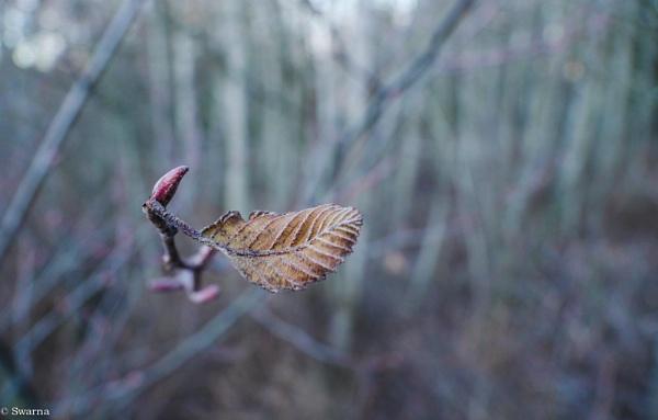 Macro Shot - Dry Leaf III by Swarnadip
