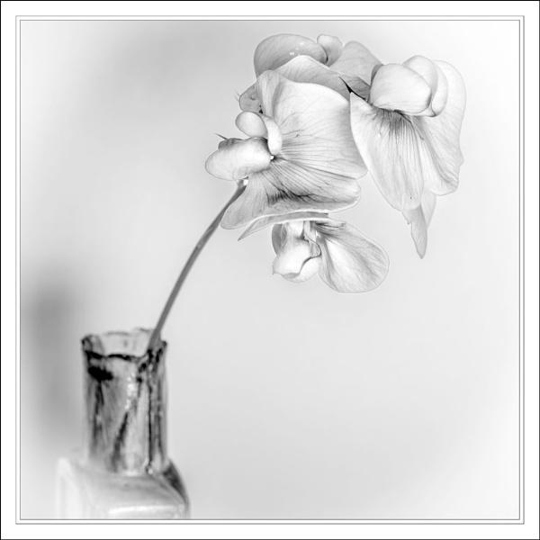 Bloom in a bottle