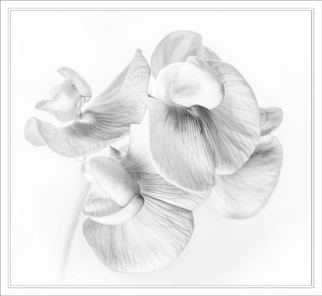 Single Bloom