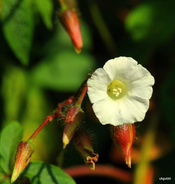 White Beauty by ukgubbi
