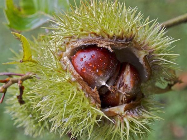 Nuts by handlerstudio