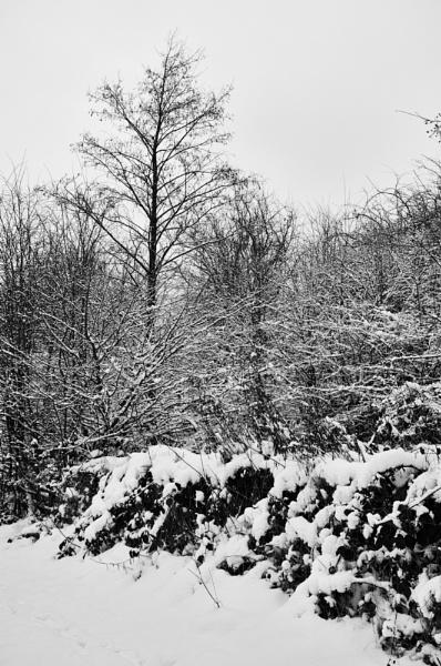 winter by psjekel