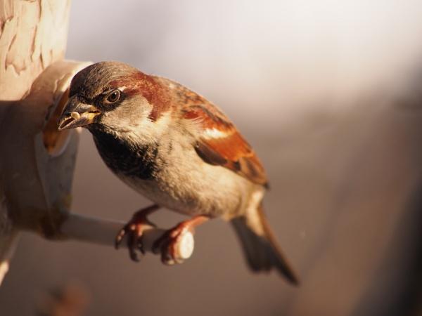 Sparrow by Xmplary