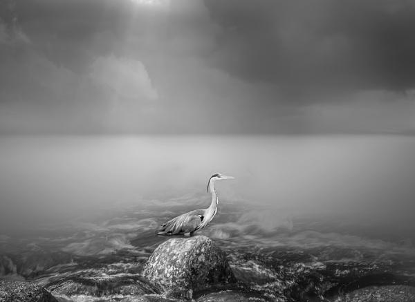 Moonlit Heron by neeley