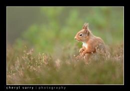 Sedate squirrel