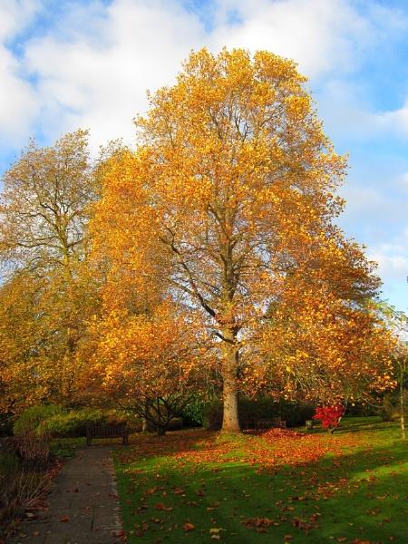 Autumn in Bath Botanical Gardens II by Glostopcat