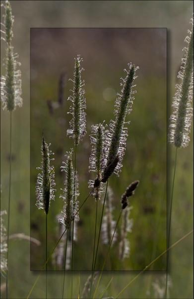 Meadow magic by LynneJoyce