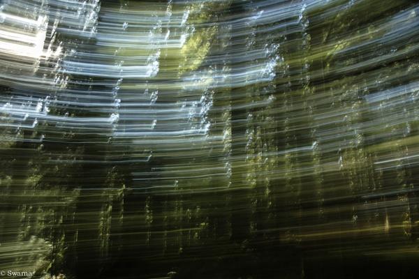 Abstract - Trees III by Swarnadip