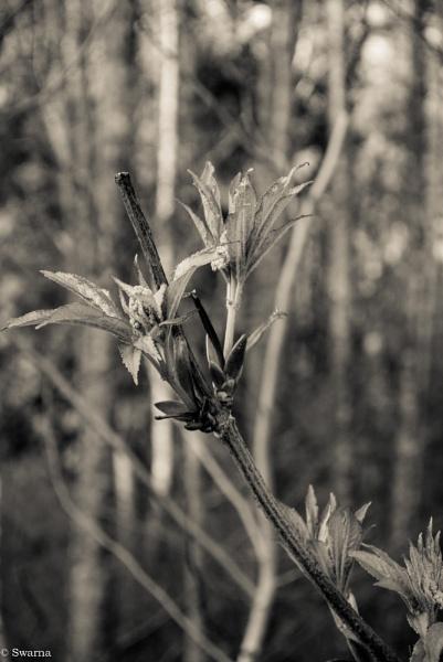 Macro Shot - Dry Leaf IV by Swarnadip
