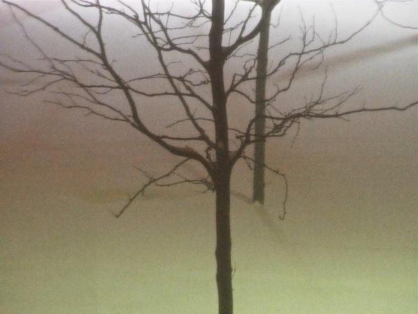 Last Thursday Night\'s Snowstorm by handlerstudio