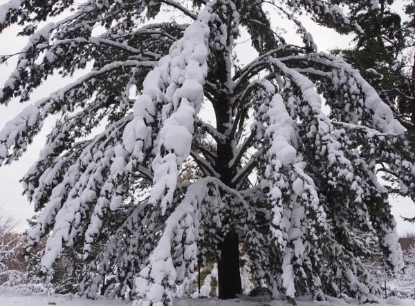 winter in Wisconsin #4 by handlerstudio