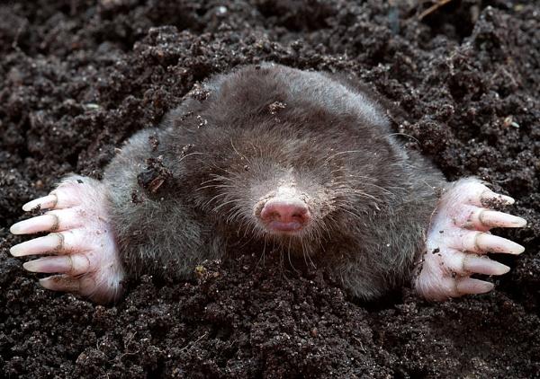 Mr Mole by Gary_Macleod