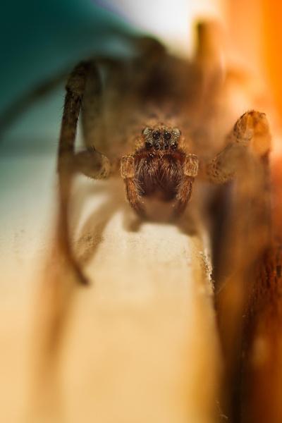 a spider... by netz