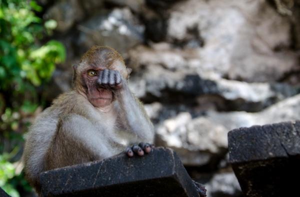 Boxing monkey by Marioks