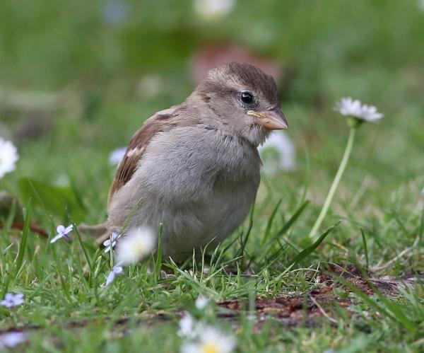 Little bird on the grass by photopix12