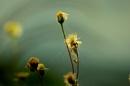 focus and unfocus flower