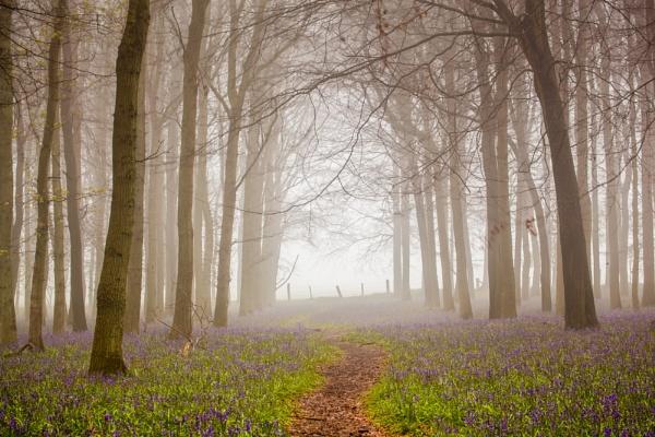 misty bells by Akif