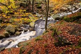 Gorge--ous Autumn