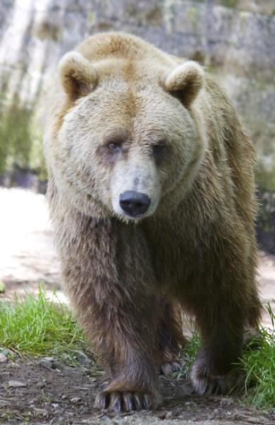 Bear View by MadVillPics