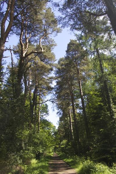 Trees to the Sky by MadVillPics