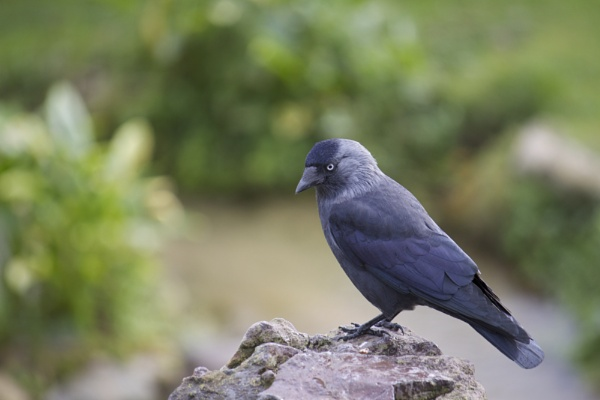 Blue Eyed Bird by MadVillPics
