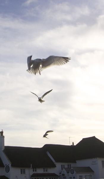 Gull Stack by MadVillPics