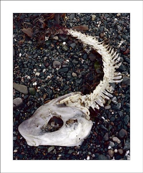 Memento mori by joolsb