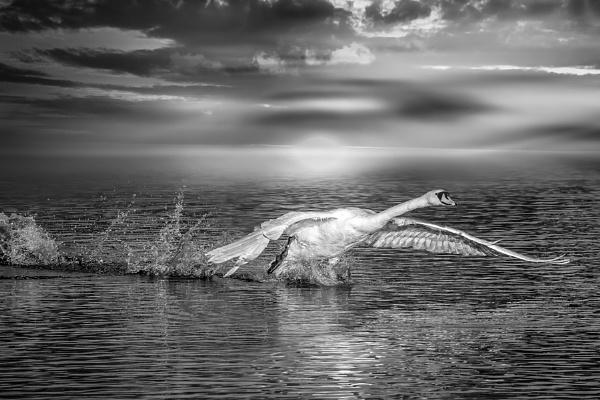 Crash Landing by neeley
