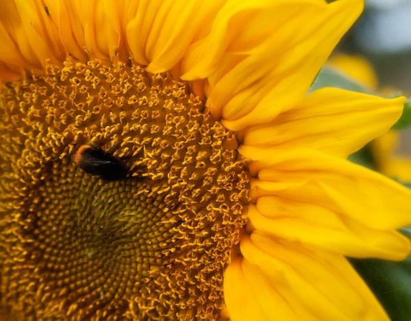 ....bring me sunshine..... by John_Horner