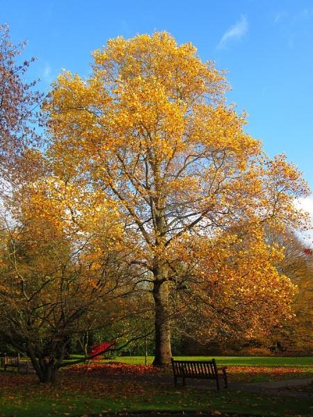 Autumn in Bath Botanical Gardens III by Glostopcat