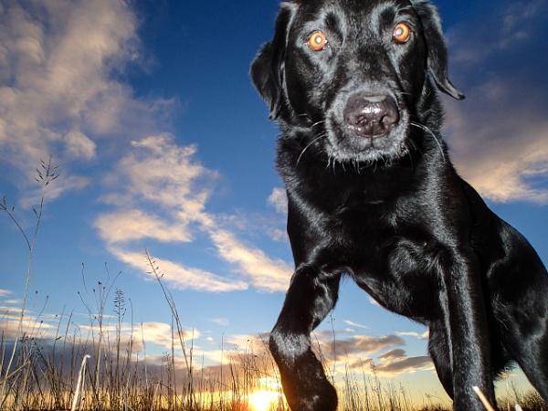 Dawn dog by RodStrachan