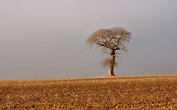 Stark Landscape by SandraKay