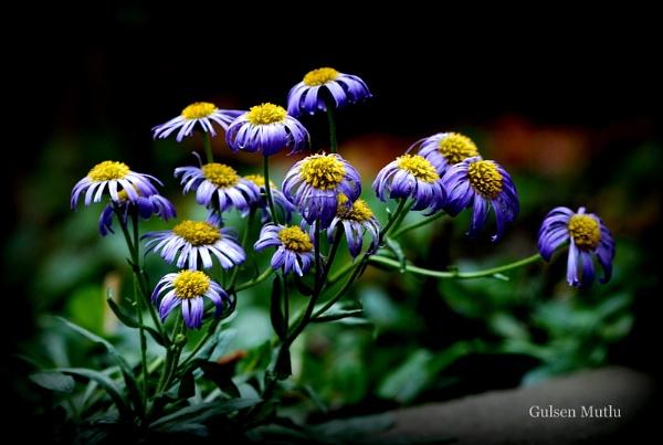 Kucuk mavi cicekler by izida