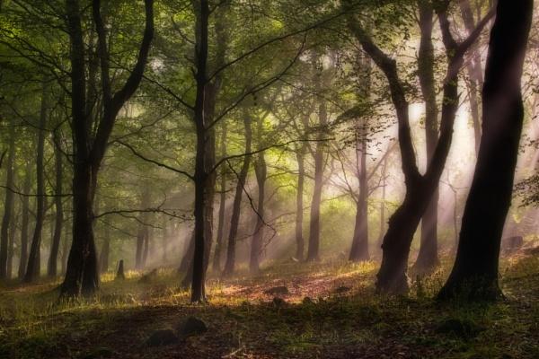 Under Milkwood by Tynnwrlluniau