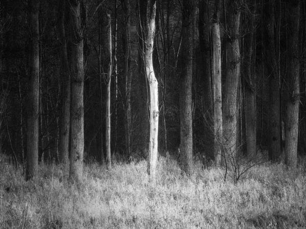 Standing alone by mlseawell